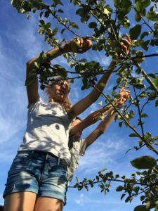 de eerste appeltjes uit eigen boomgaard